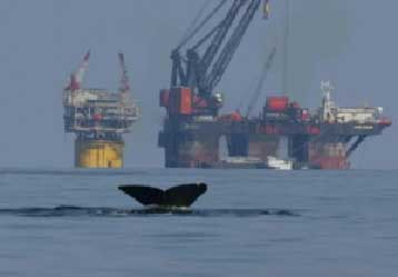 Oil exploration and marine mammals