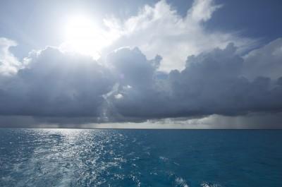pelagic scene