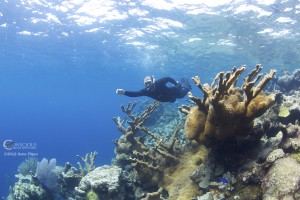 Silver Bank coral reef