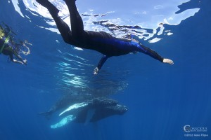 Swim With Whales Glasy Floaters 300x200 Swim With Humpback Whales