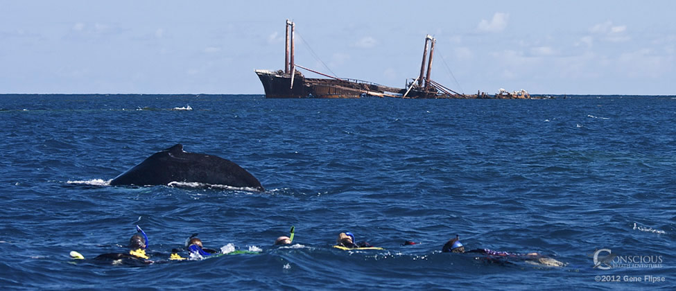 Swimming_with_Humpback_Whales_on_the_Silver_Bank