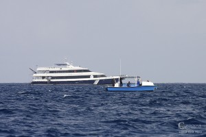 Conscious Breath Adventures whale boat and Sun Dancer II