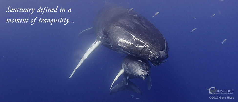 Humpback Whale & Calf Sanctuary Defined