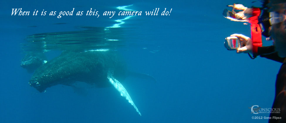 Swim With Whales Any Camera Will Do