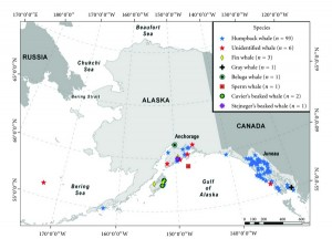 Summary of whale-vessel collision reports in Alaska by species 1978–2011