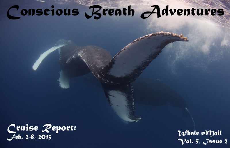 Conscious Breath Adventures Cruise Report: Jan. 26-Feb. 1, 2013