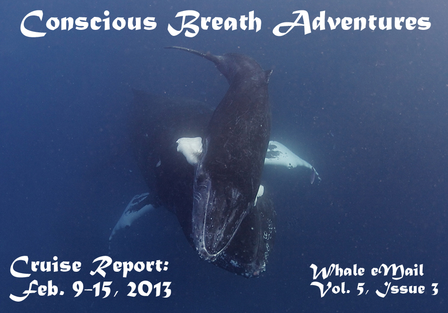 Conscious Breath Adventures Cruise Report: Feb. 9-15, 2013