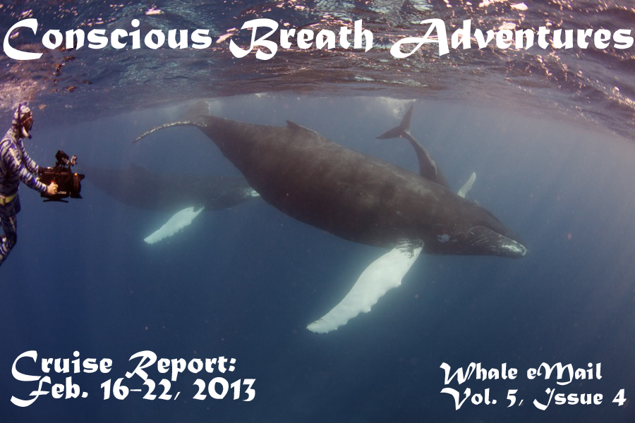 Conscious Breath Adventures' Cruise REeport: Week 4, February 16-22, 2013