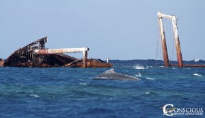 The escort with the rake marks swims near the Wreck of the Polyxeni