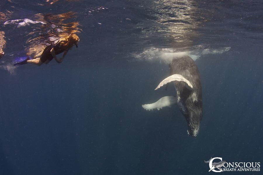 emale humpback whale calf