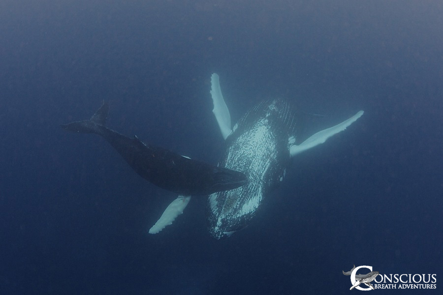 The mother humpback with the unusual sleeping behavior returns