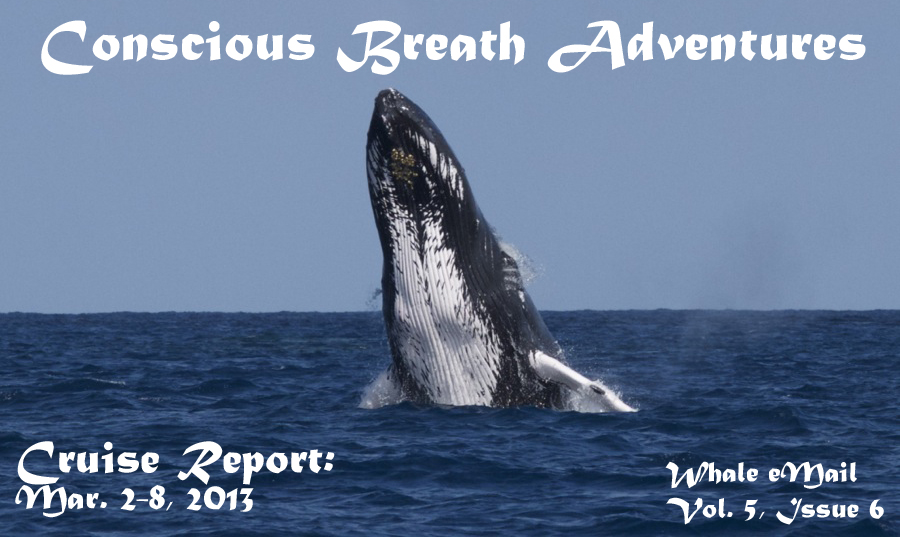 Conscious Breath Adventures' Cruise Report: Mar. 2-8, 2013