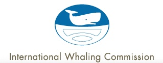 the international whaling commission essay Men from the shetland islands worked the whaling expeditions to the antarctic   her writing has appeared in the atlantic, the guardian, and  regulation via the  international whaling commission had made it unprofitable.