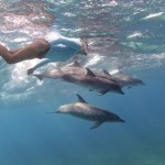 Swimming with wild dolphins in the Bahamas