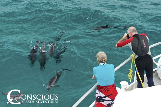 Spotted dolphins approach the bow