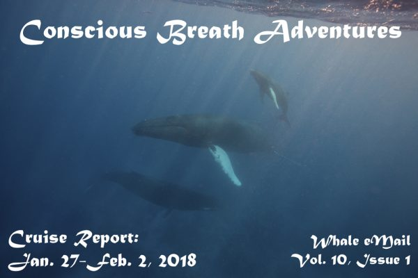 Cruise Report, 2018 Week 1: Jan. 27-Feb. 2 – Conscious Breath Adventures