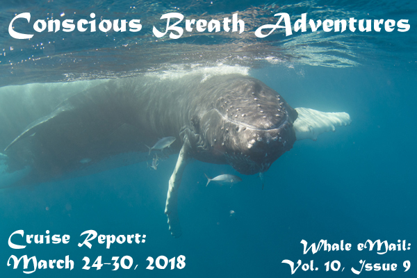 Cruise Report: Week 9, Mar. 24-30, 2018 – Conscious Breath Adventures