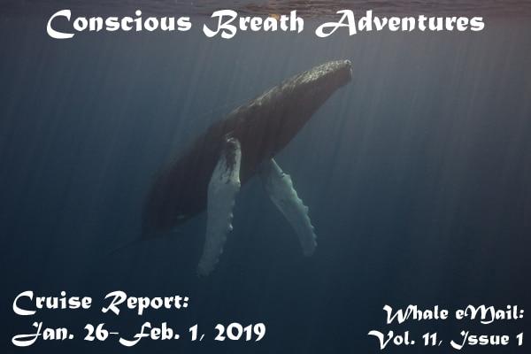 Cruise Report, Week 1: Jan. 26-Feb. 1, 2019