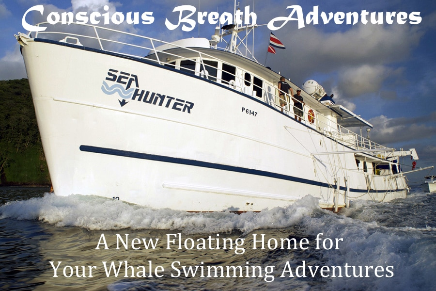 A New Floating Home for Your Whale Swimming Adventures