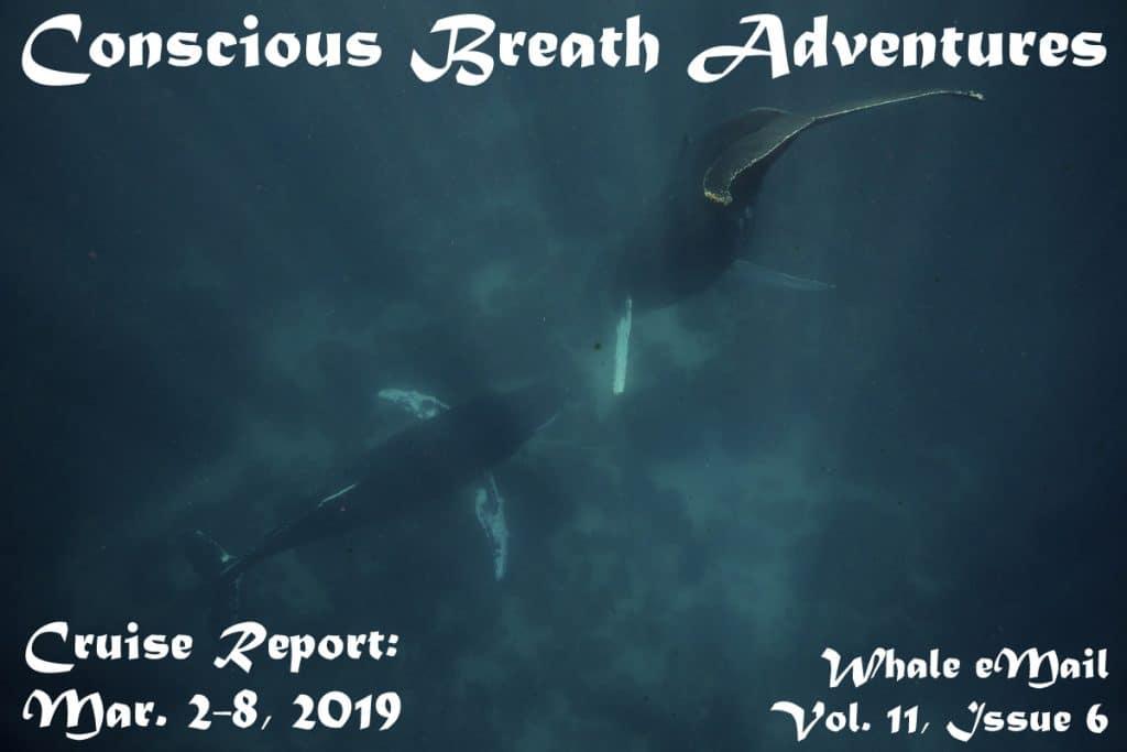 Cruise Report, Week 6: Mar. 2-8, 2019